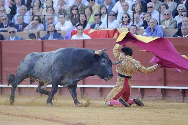 Afarolado de rodillas de Rafaelillo en el tercero. (FOTO; Matito)