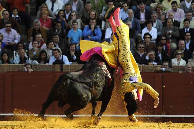 El toro rebaña por abajo y lo voltea de forma dramática.