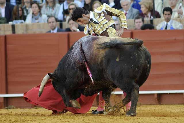 El toro comezó a ponerse a la defensiva.
