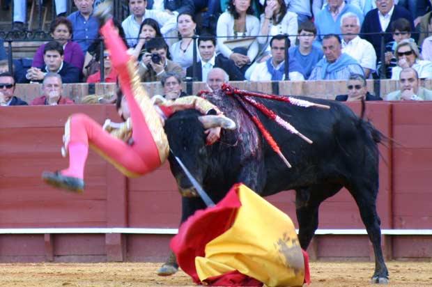 Con el torero en el aire, el novillo lo zarandeó con saña.