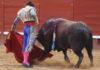 Morante ha cortado una oreja a este toro hoy en Jerez. (FOTO: desdelcallejon.com)
