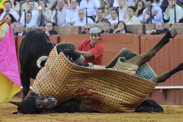 Uno de lo caballos de picar sufrió una cornada en el costado.