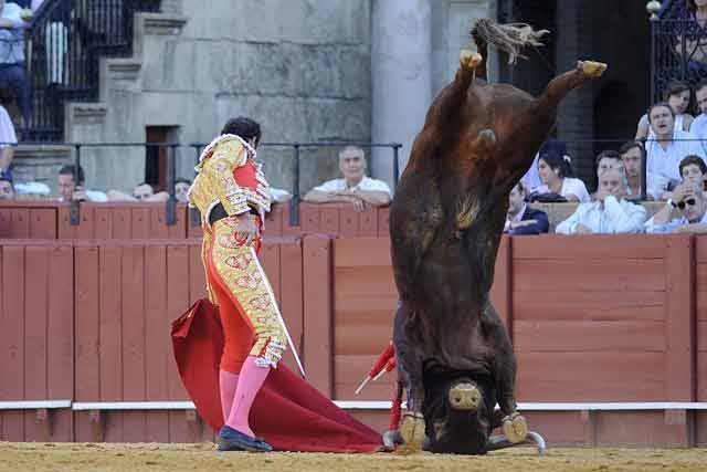 ¿Un toro olímpico?