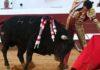 El Cid, en la corrida de esta tarde en Dax. (FOTO: burladero.com)