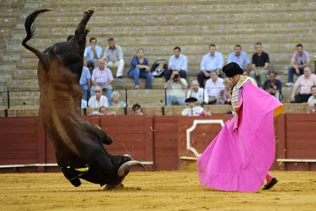Novillos inválidos. (FOTO: Sevilla Taurina)