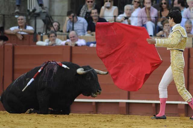 López Simón intenta levantar a su primer novillo. (FOTO: Sevilla Taurina)