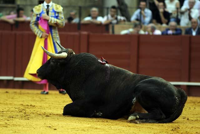 Los novillos de 'Toros de La Plata'. (FOTO: Sevilla Taurina)