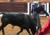 Espartaco, en un largo natural al astado de Gavira hoy. (FOTO: Gallardo / badajoztaurina.com)