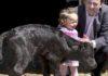 'Got', el primer toro bravo clonado, al poco de nacer.