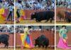 Los toros del escándalo, uno a uno. (FOTO: Matito)