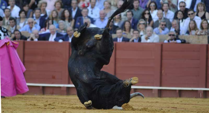 El toro se pegó una enorme costalada y finalmente fue devuelto a corrales por manifiesta debilidad. (FOTO: Matito)