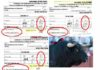 Los tres veterinarios aprobaron al toro de Zalduendo que el Gobierno vasco rechazó un mes antes por 'despitorrado' del cuerno derecho.