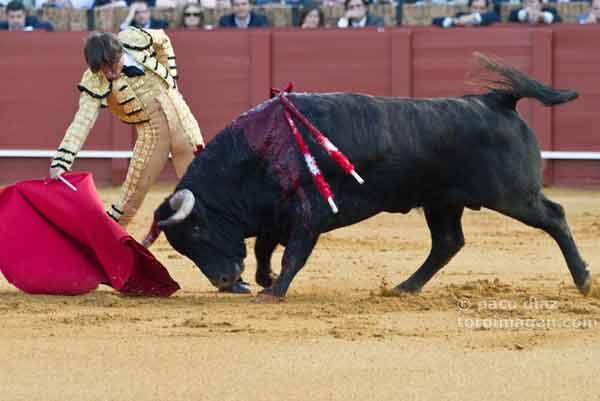 El sevillano Antonio Barrera en un derechazo. (FOTO: Paco Díaz/toroimagen.com)