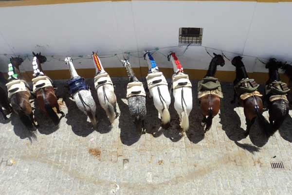 Los caballos de rejoneo, adornados y preparados para salir al albero de la plaza de Sevilla. (FOTO: Javier Martínez)