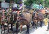 Ante la suspensión de la empresa de la Maestranza, el Real Club de Enganches celebró la exhibición en las calles aledañas a la plaza con sol.