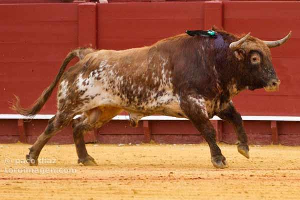 Toro de El Ventorrillo.