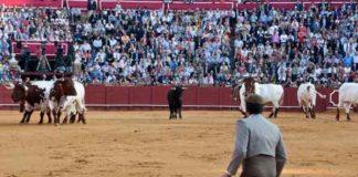 El quinto, devuelto a corrales. (FOTO: Paco Díaz/toroimagen.com)
