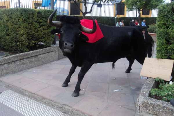 ¡Cuidado! ¡Que uun toro se ha escapado de la Maestranza! (FOTO: Javier Martínez)