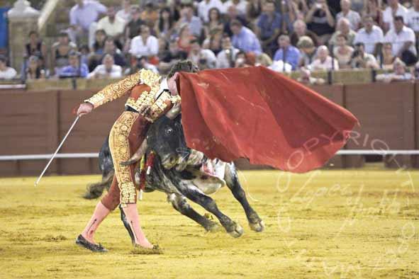 El novillo se le cuela hacia al cuerpo a Tomás Angulo. (FOTO: López-Matito)
