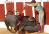 El sevillano Manuel Escribano en un apretadísimo par de banderillas en mayo en Antequera, con un toro de Victorino Martín. (FOTO: desdelcallejon.com)