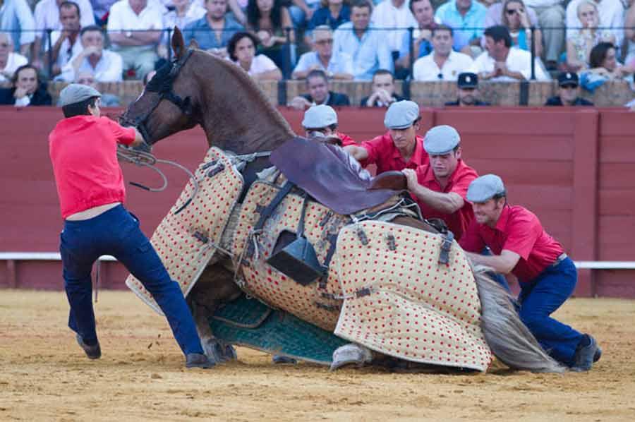 Los monosabios se afanan en levantar al caballo derribado. (FOTO: Paco Díaz/toroimagen.com)