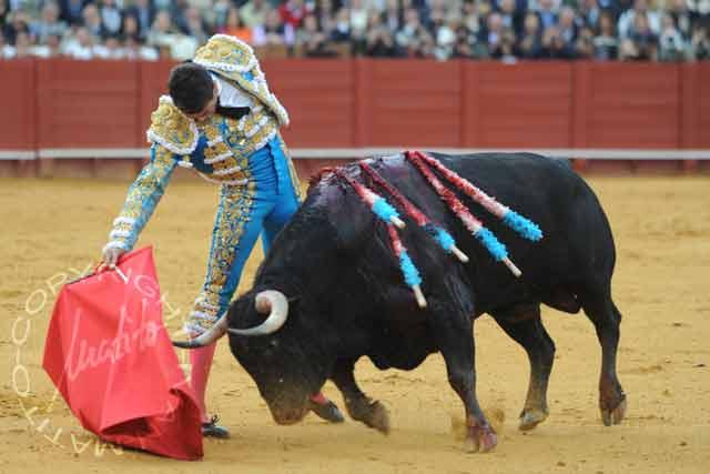 El excelente toro indultado 'Arrojado', de Cuvillo.