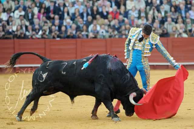 Manzanares y el toro indultado, 'Arrojado', de Cuvillo.