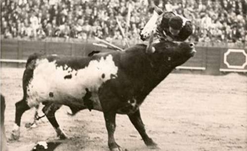 Diego Puerta, colgado de los pitones en varias ocasiones de los pitones de 'Escobero', de Miura.