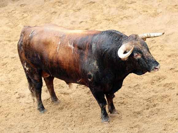 4º Número 74. Profesor. Colorao chorreao. 550 kilos (11/07).
