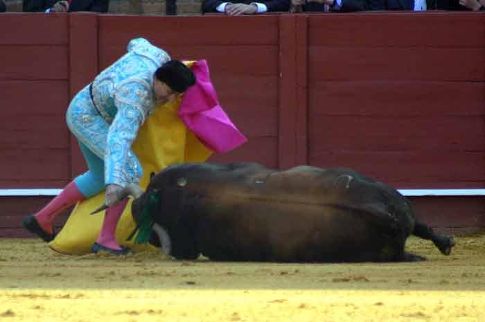 El Boni intenta levantar a un toro para seguir la lidia. (FOTO: Javier Martínez)
