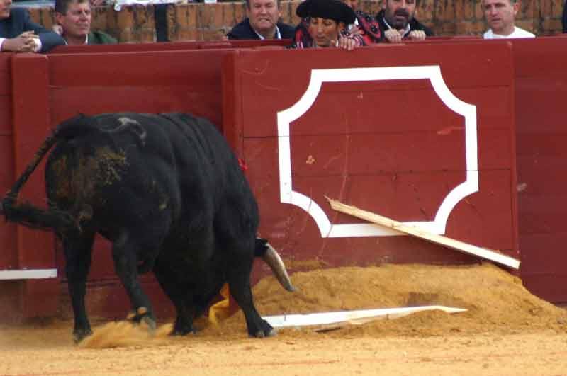 El derrote del toro de Montealto partió en dos este estribo de las tablas.