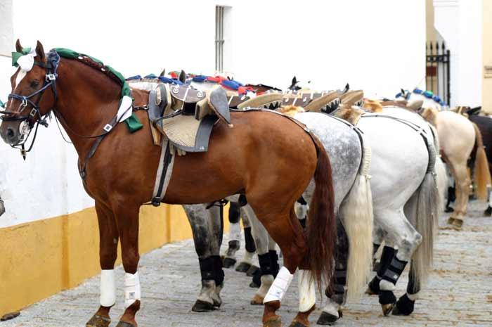 Los caballos aguardan en el exterior.