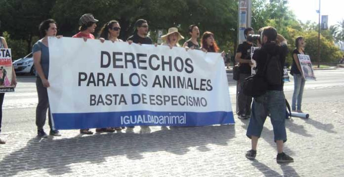 Un reducido grupo de antitaurinos se manifiestan el pasado Corpus en la misma acera de la Maestranza. (FOTO: Javier Martínez)