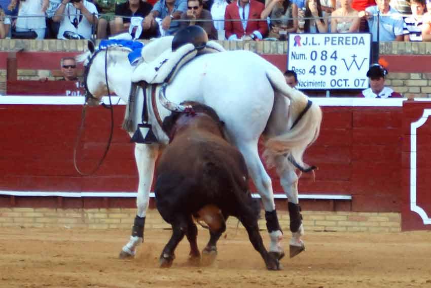 'Galán', a merced del toro.