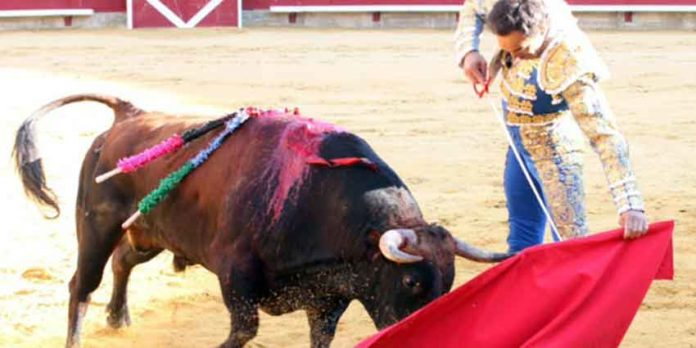 El Cid toreando al natural hoy en Palencia. (FOTO: Félix San José/mundotoro.com)