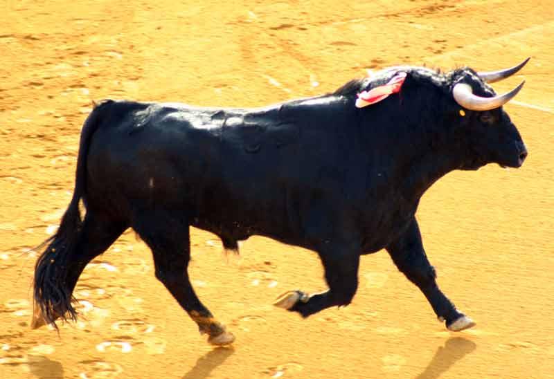 El tercero, de Toros de Cortés (devuelto).