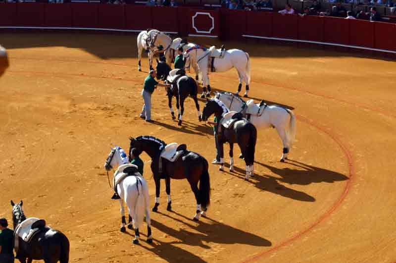 Ventura sacó como exhibición en el paseíllo a los 20 caballos de su cuadra.