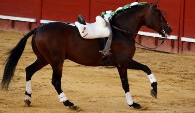 El caballo 'Califa', de Diego Ventura.