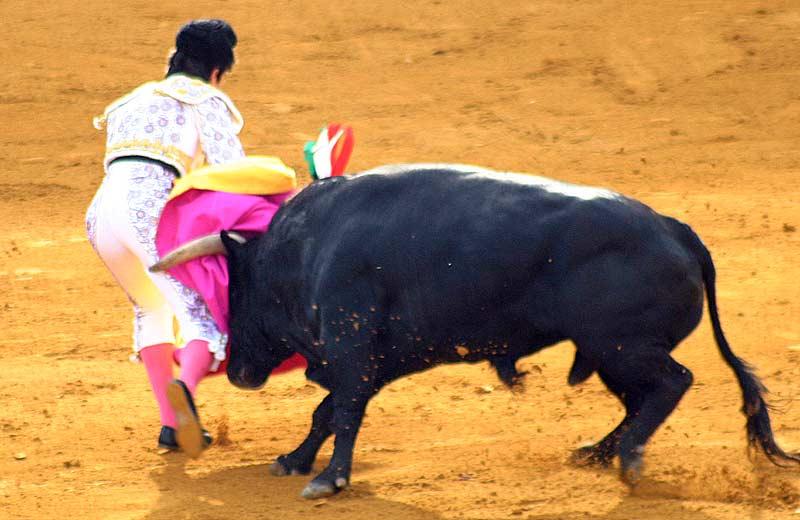 Secuencia de la cogida sin cornada de Sebastián Castella.