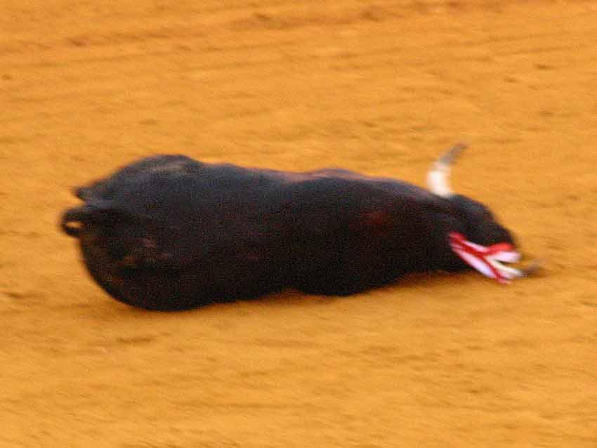 Indigno para Sevilla, (FOTO: Javier Martínez)