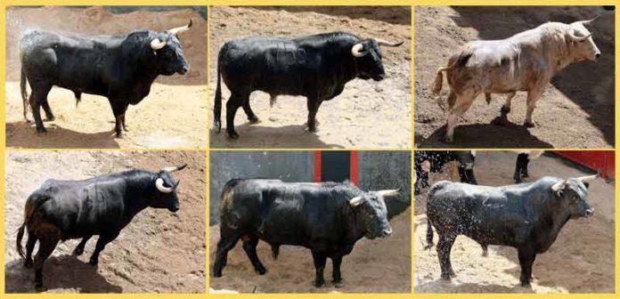 Los toros de Victoriano del Río sorteados para esta tarde, por orden de lidia.