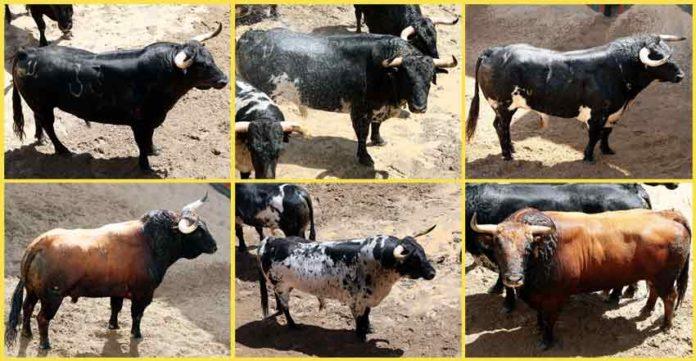 Los toros a lidiarse hoy de Torrestrella, por orden de salida.