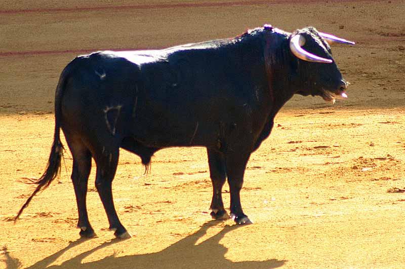 El primero de Villamarta.