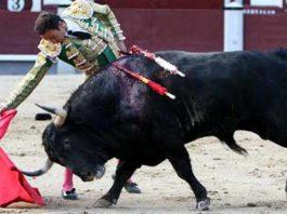 El Cid, en un derechazo esta tarde en Madrid. (FOTO: las-ventas.com)