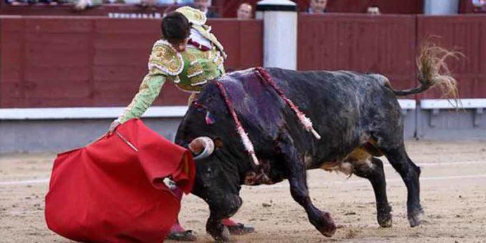 Antonio Nazaré, con uno de sus toros de Los Bayones, hoy en Madrid. (FOTO: las-ventas.com)