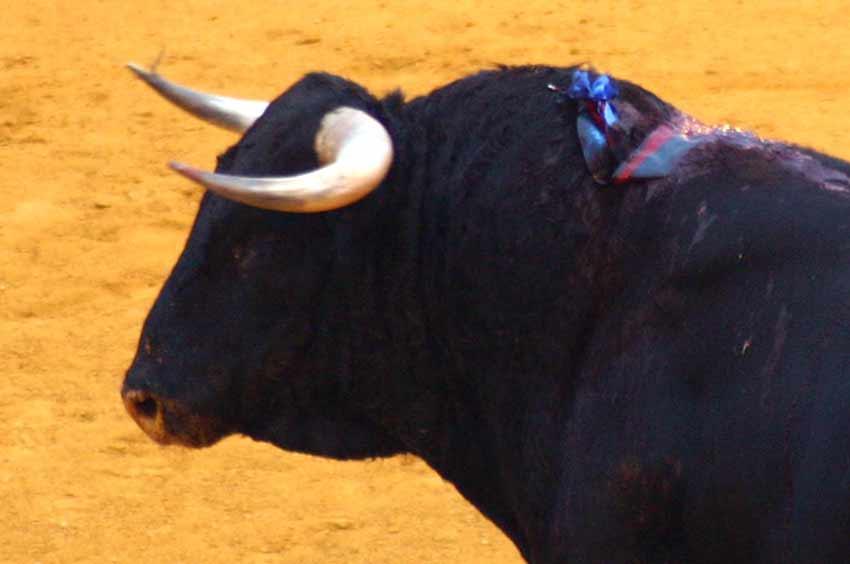 Un toro de Pereda, ayer en la primera de San Miguel.