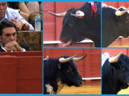 El delegado de la Junta de Andalucía en Sevilla, Javier Fernández, permanece cruzado de brazos mientras observa uno tras otro los toros sin trapío suficiente que se están lidiando en Sevilla.