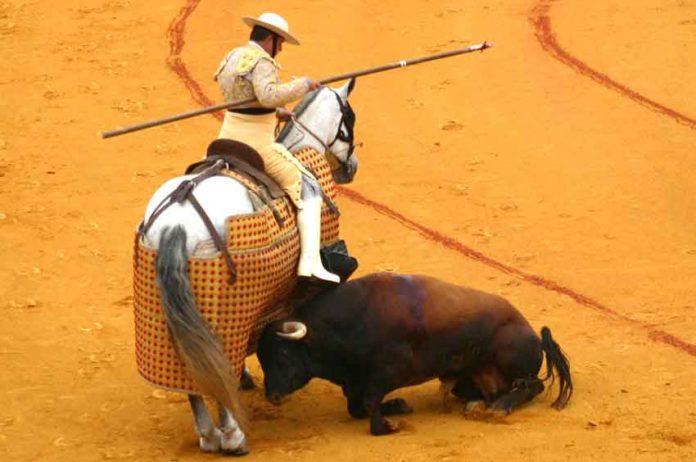 Uno de los toros lidiado durante el pasado ciclo de San Miguel. (FOTO: Javier Martínez)