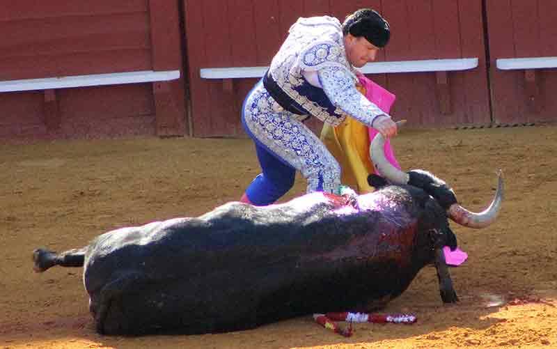 EL primer toro de Enrique Ponce, un auténtico inválido.