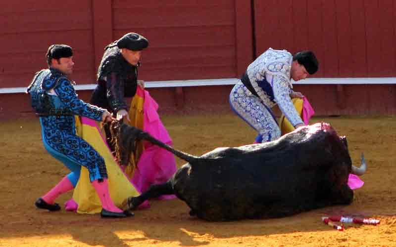 La cuadrilla entera intentando poner al toro en pie.